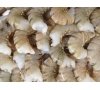 Shrimp 13/15 Ex Jumbo Shell On