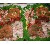 Seafood platter(1)