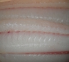 Fresh Fluke(North Atlantic Sole) Fillet Boneless (Sushi Grade)