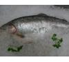 Fresh Whole Salmon Trout