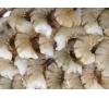 Shrimp 13/15 Ex Jumbo Shell On