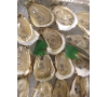 Oysters shuck on ice