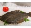 Whole Fresh wild Fluke(North Atlantic sole)