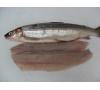 Wild Whitefish